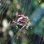 Insecten spin in web